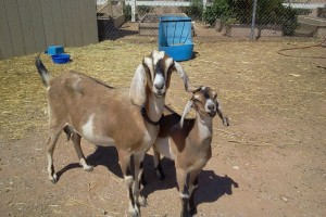 My fertilizer providers, aren't they ADORABLE!!!