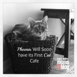 Phoenix Will Soon have its First Cat Cafe