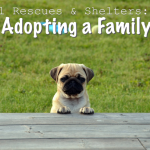 Animal Shelters & Rescues: Adopting a Family Pet
