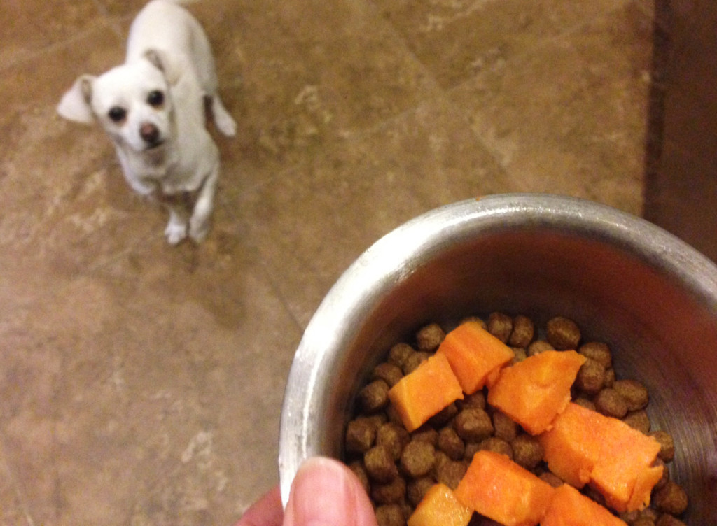 evmb_farmers_market_meals_dog