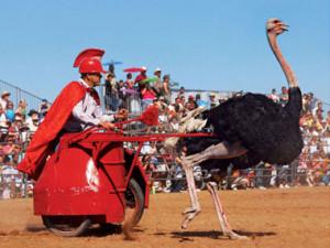 Ostrich-Races