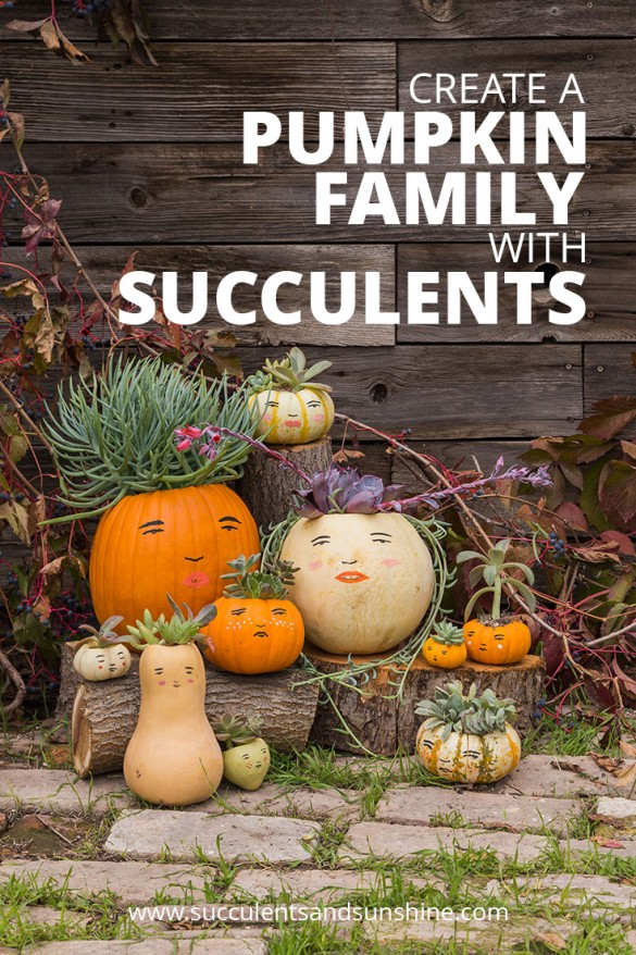 this-fun-succulent-pumpkin-family-is-sure-to-grab-the-neighbors-attention-585x878