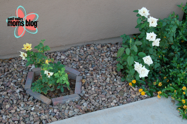 Confessions of a wannabe gardener. East Valley Moms Blog. Tabitha Dumas (2)