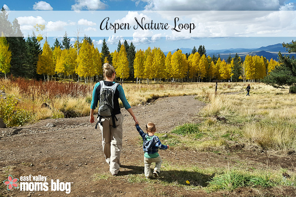 A guide to the best places in Arizona to take in the splendor of fall foliage with your family!