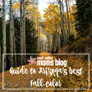 Throw on your boots, a scarf, grab a PSL, and head out to see some of Arizona's best Fall color! Our guide has all the best spots to enjoy and explore the gorgeous changing leaves with your family.