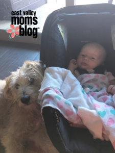 My Daughters Best Friend: National Dog Day | East Valley Moms Blog