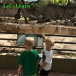 Making the Most of Your Trip to the Zoo