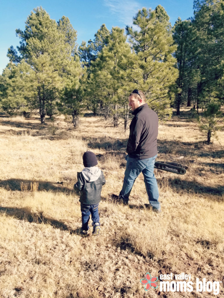 Everything you need to know about cutting down your own Christmas tree in Arizona! From permits and scouting trees to cookies and cocoa!