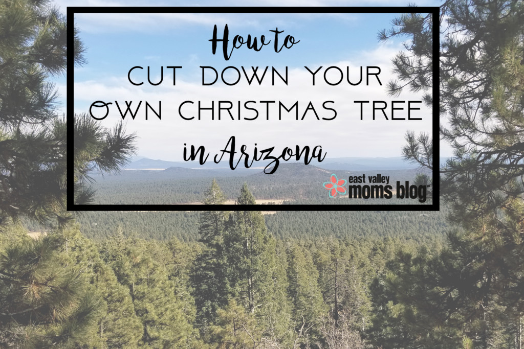 How To Cut Down Your Own Christmas Tree In Arizona