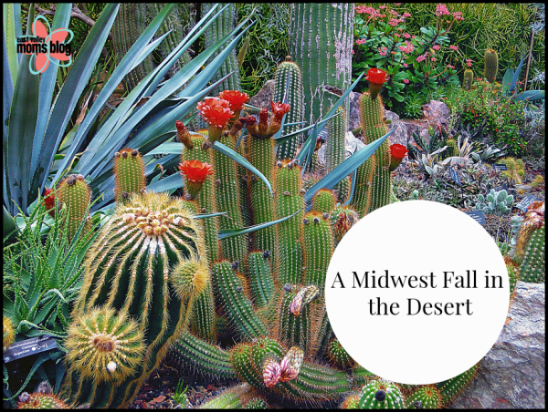 A Midwest Fall in the Desert